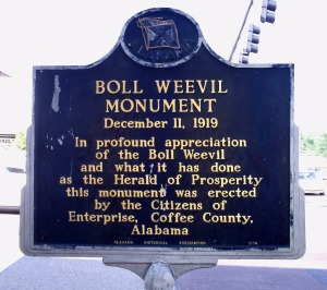 boll weevil plaque