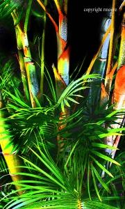 palmtreesjpg